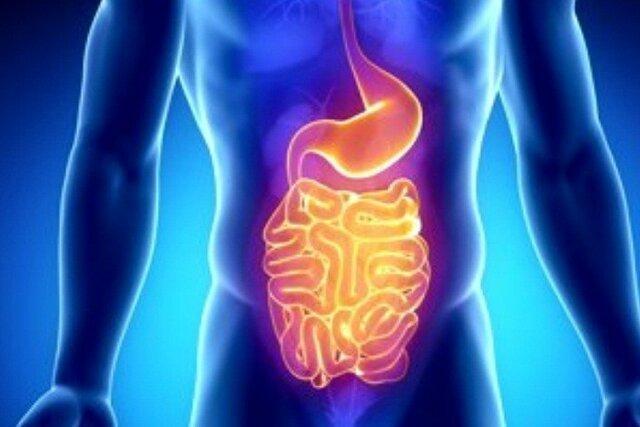 تاثیر برخی باکتری های روده بر خطر ابتلا به سرطان